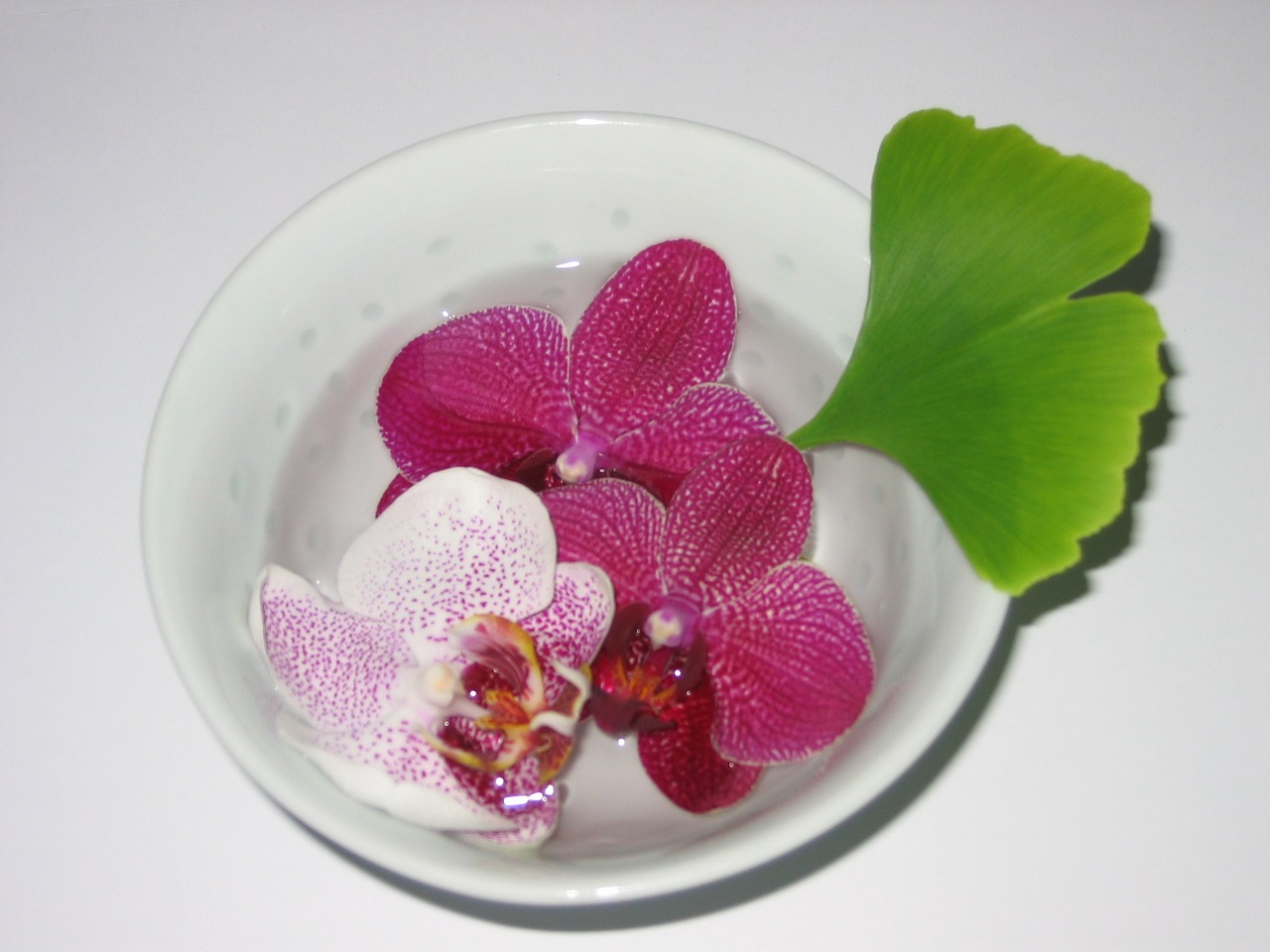 bowl-947297_1280